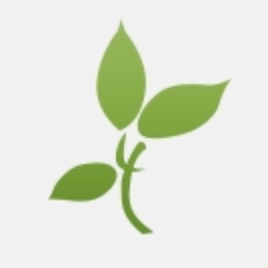 Brokkoli por  VivaNatura-